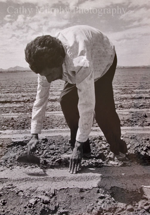 Cesar chavez working in the fields